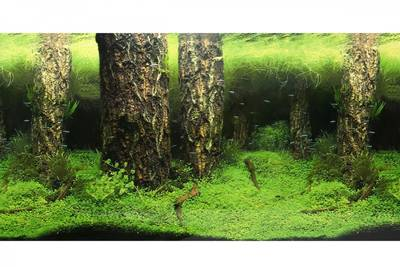 Natura - 9086/9087 50cm 15Mt Amazon-Bitkili Kaya Pls.Manz..