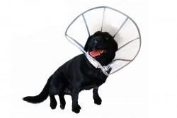 DogCat Plus - DogCat Plus Elizabeth Şeffaf Yakalık XL