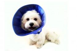 DogTorin - DogTorin Elizabeth Mavi Yakalık M Antibakteriyel