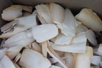 Pelagos - Kırık Mürekkep Bal.Kemiği (Kalamar) 1 Kg
